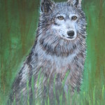 "Grey Wolf $250.00 15"" x 19"" Mixed Media"